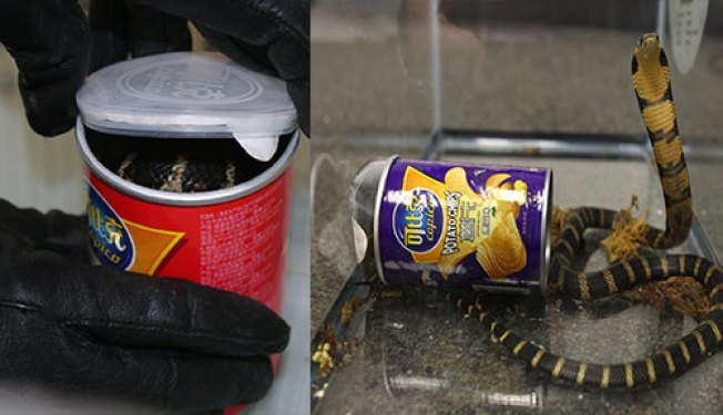Man Accused of Smuggling King Cobras in Potato Chip Cans