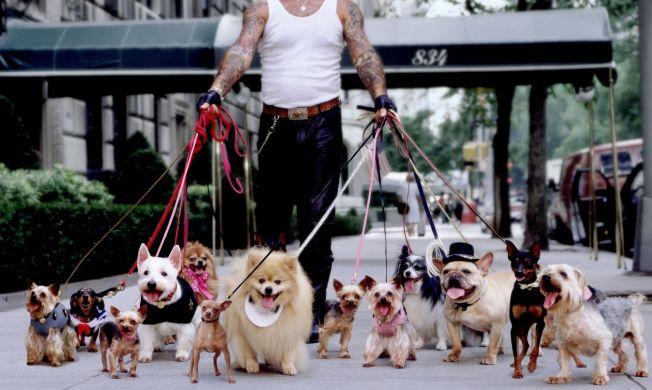 Dueling Dog Walkers War in Manhattan