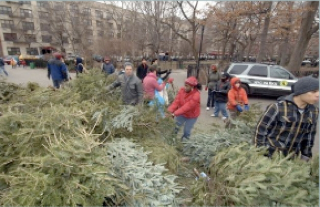 Recycle Your Tannenbaum This Weekend