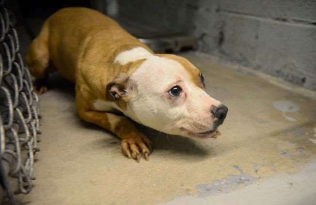 Dead Dogs, Malnourished Pit Bull Puppies Found in Paterson Drug Raid: Police