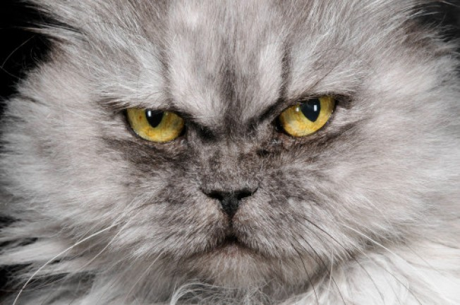 Counter Intelligence: Me-Yow! Cats Forced to Go Vegan