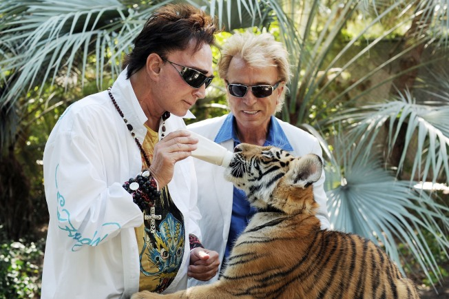 Siegfried and Roy Share Stage With Attack Tiger