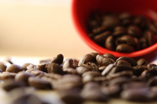 Notable Newbie: Coffee Peddlar
