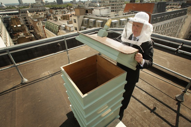 Urban Beekeeping is More Than Just Buzz