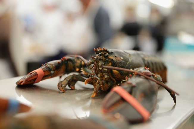 Warmer Waters Might Prevent Baby Lobsters From Surviving
