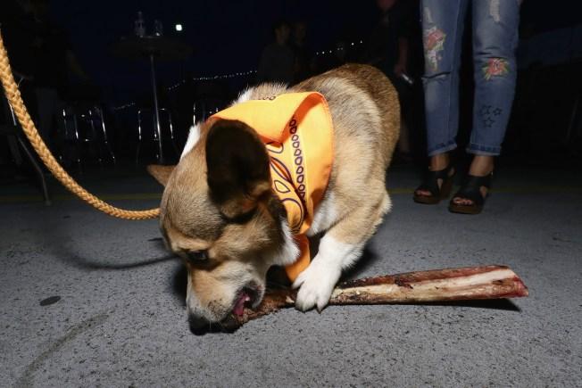 FDA Issues Warning for Dangerous Dog Bone Treats