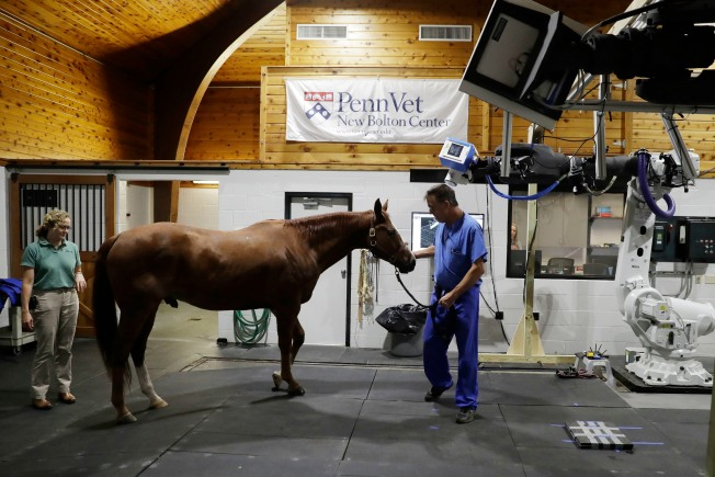 Robotic Horse Scans Could Hold Promise for Human Health