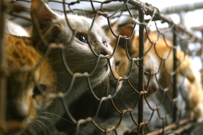 Pet Lovers Protest Cat Meat on the Menu in China