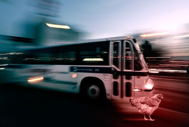 City Buses Travel Slower Than Chickens Walking