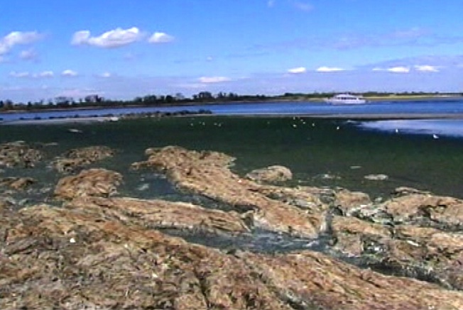 Rotting Seaweed Stinks Up Waterfront Community
