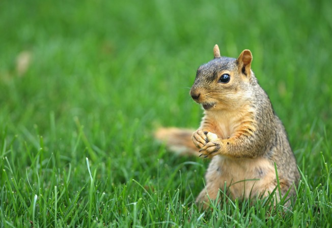 The Great Chicago Squirrel Census