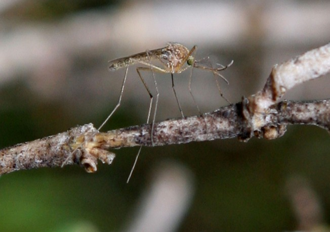 More West Nile Cases As Health Concerns Grow