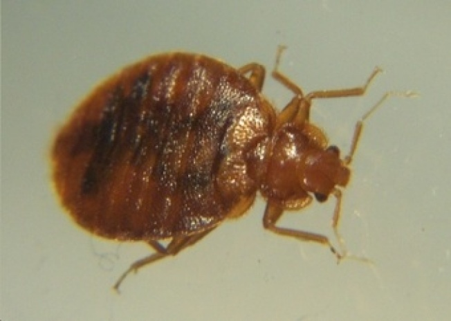 Proposed Bedbug Bill Requires Landlords to Disclose Infestation History
