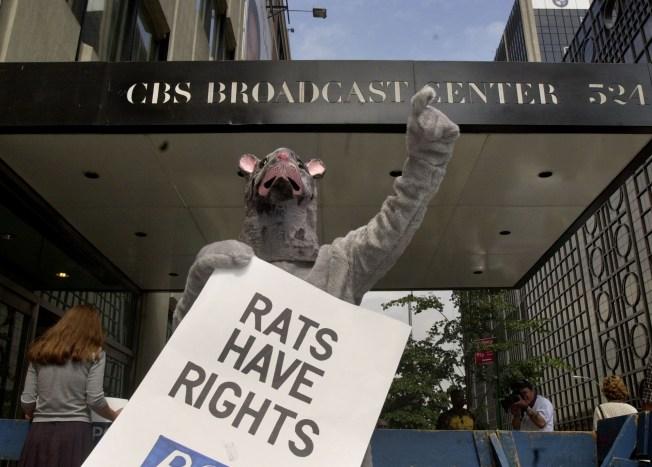 City of Rats