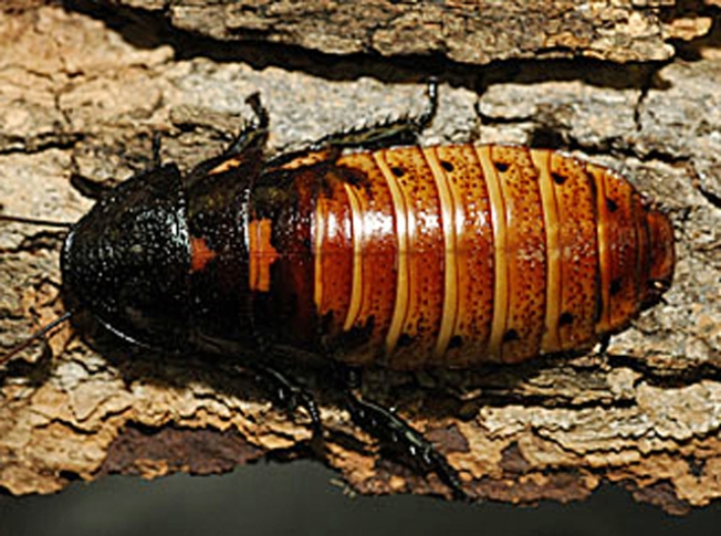 The Bronx Zoo Wants You to Name a Roach This Valentine's