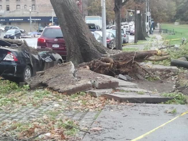 NYC Trees That Fell During Sandy Will Be Recycled
