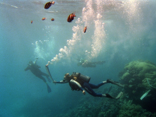 Great Barrier Reef Coral in Crisis