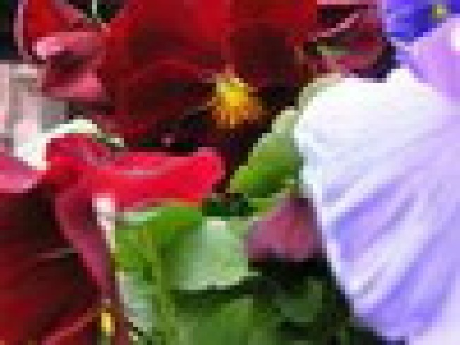 Planter Wars: The battle of the Carroll Gardens...