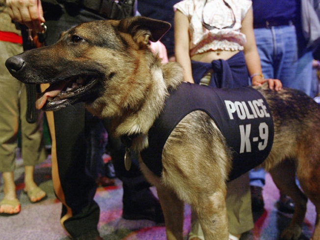 N.J. Considers Harsher Punishment for K-9 Killers