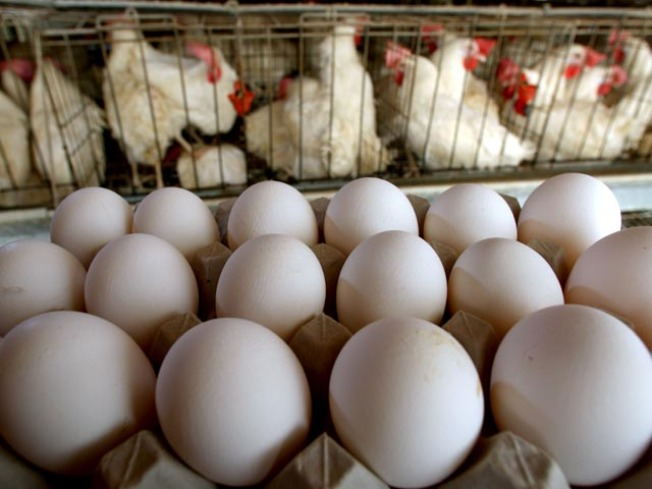 Eggs From Suspect Farms Will be Processed, Sold