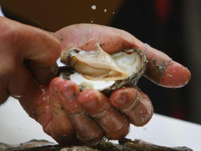 The $9.99 All-You-Can-Eat Oyster Special
