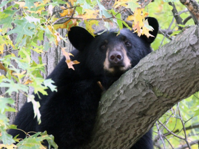 NJ Courts Refuse to Stop Bear Hunt