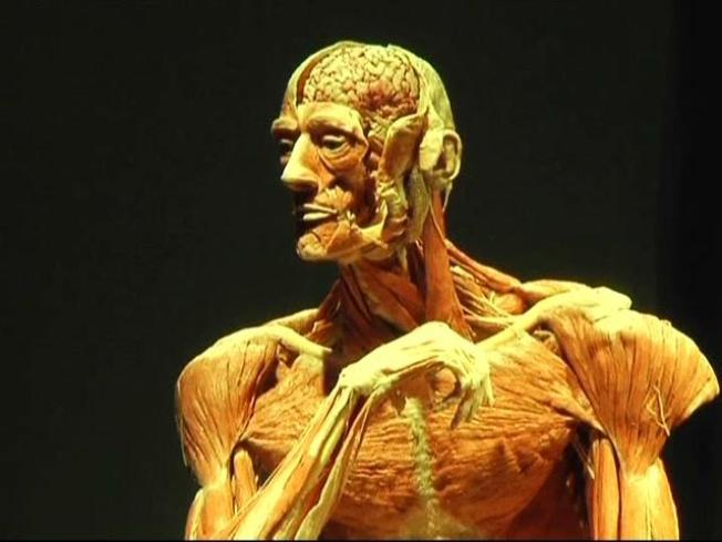 TMI: 'Body Worlds' Creator Explores Corpses and Coitus