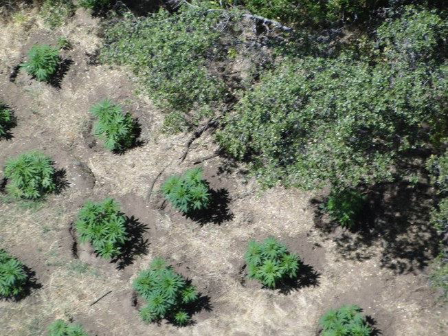 Study Finds Medical Pot Farms Draining Streams Dry in Northern California