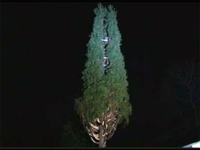 Rockefeller Tree to Take Its Place in History