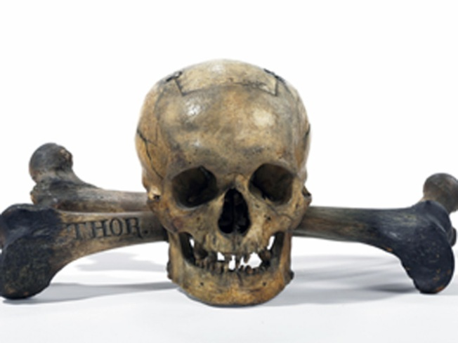 Secrets of the Skull (and Bones) for Sale