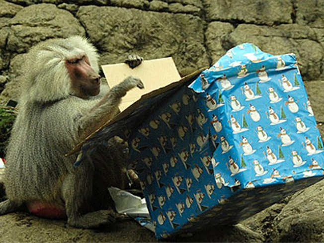 Holiday Must: Zoo Animals Go Ape for Gifts