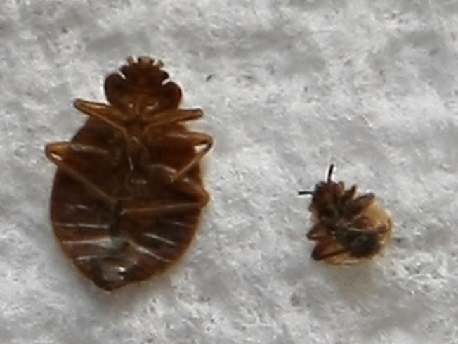 Bedbugs Could Be Scaring Off Tourists