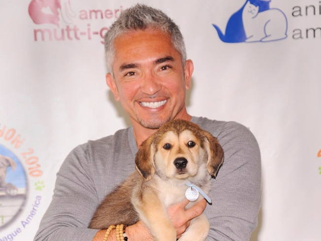 Cesar Millan Reveals Suicide Attempt Following Dog's Death and Divorce