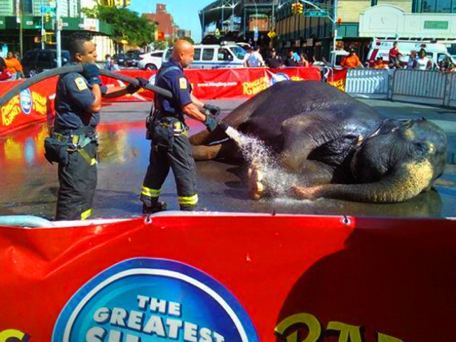 FDNY Hosed in Elephant Act