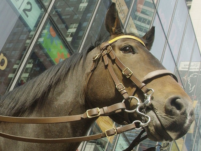 Man Allegedly Punches Officer's Horse