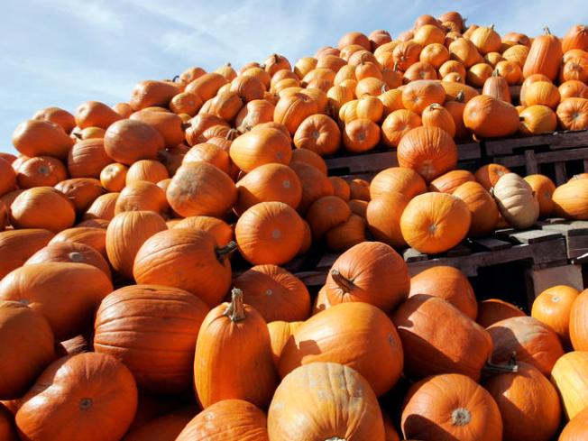 Ummm … Would You Pay to Drop Pumpkins Off a Balcony?