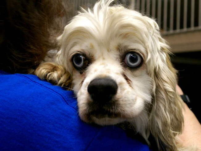 When Dogs Fly:  50 Rescue Pups Flown to Long Island