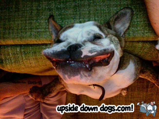 Our Favorite Things of 2008: Upside Down Dogs
