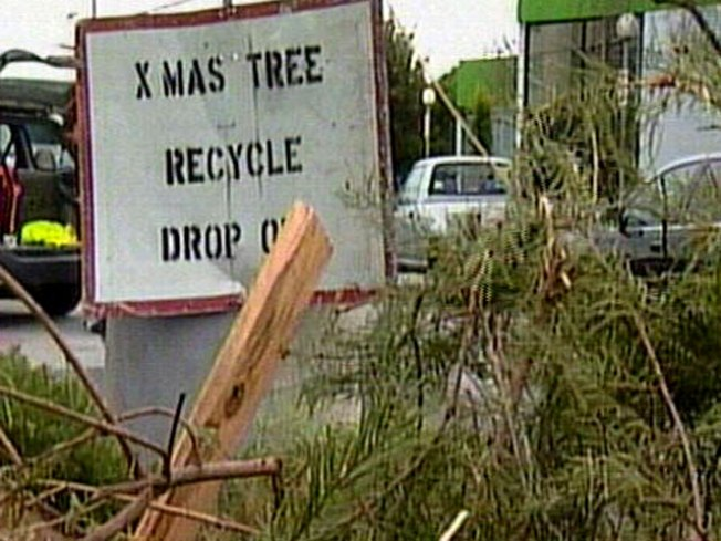Mulchfest Grinds Through 23K Christmas Trees