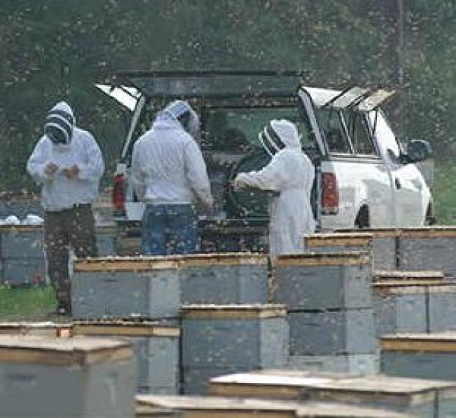 Mysterious Honey Bee Disorder Buzzes into Court