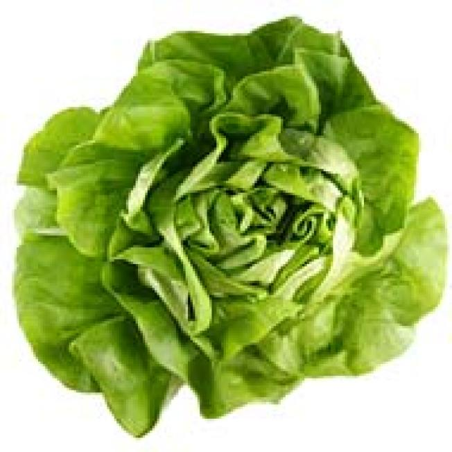 Lettuce Scare: Outbreak of E. Coli in NY
