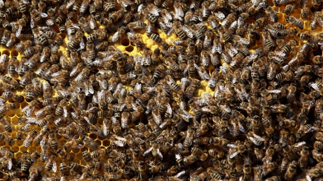 Truck Tips, Freeing 14 Million Bees, River of Honey