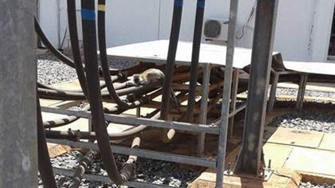 Monkey Triggers Nationwide Blackout in Kenya