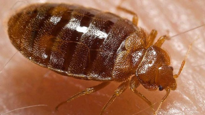 NYC Health Department Headquarters Has Bedbug Problem: Report