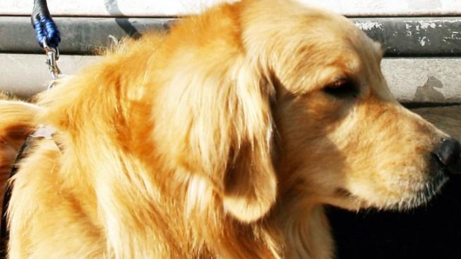Loyal Dog Helps Searchers Find Dead NJ Hiker