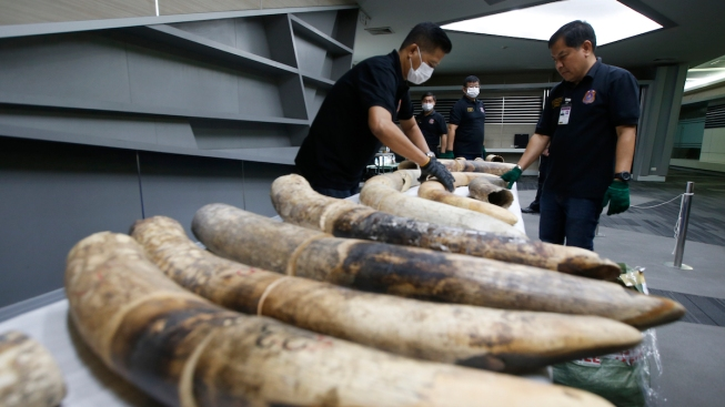 Thailand Seizes Large Elephant Tusks Worth Over $450,000