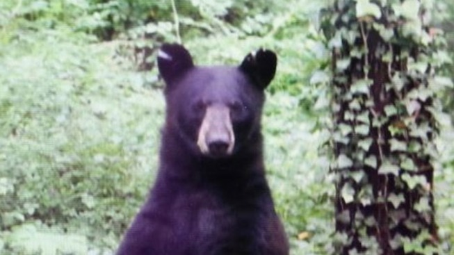 350-Pound Bear Found Hiding in Crawlspace of New Jersey Home Days After Annual Hunt Ends