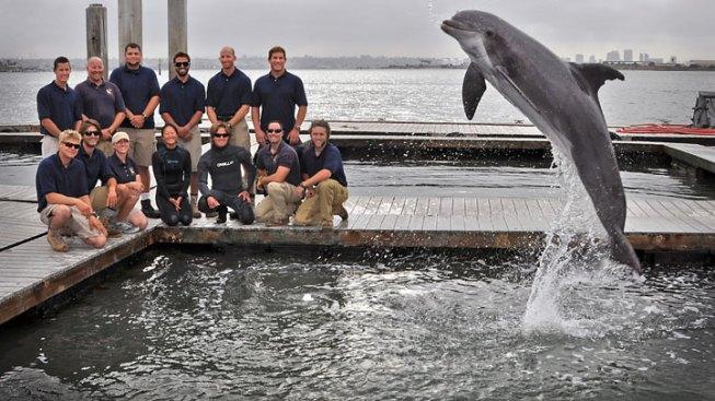 Navy Dolphins Find Rare Torpedo Off Coronado