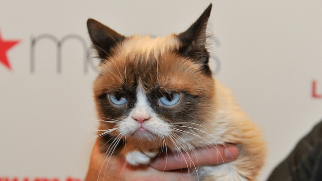 Internet Sensation Grumpy Cat Joins the Cast of 'Cats'