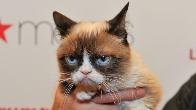 Internet Sensation Grumpy Cat Joins the Cast of 'Cats'